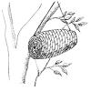 Fabrication d'une ruche