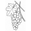 Alimentos en la Biblia: Uvas