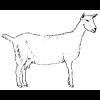 La Cría de Cabra