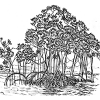 Les mangroves magnifiques