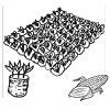 [EE] How to Grow Young Plants of *Maize