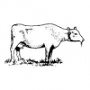 Cattle Care