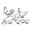How to Treat Coccidiosis in Chickens