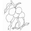 Comment Conserver des Fruits