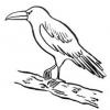 Animales en la Biblia - El cuervo