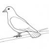 Animales en la Biblia - La paloma