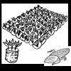 Siembras tempranas de maíz