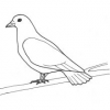 Bible Animals - The Dove