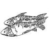 Bible Foods - Fish