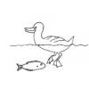Keeping Fish and Ducks